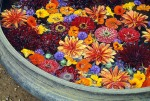 The inspiring flower bath.