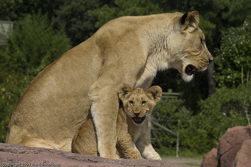 Protective Mother